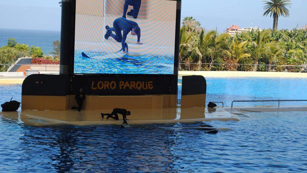 US Loro Parque Tenerife11