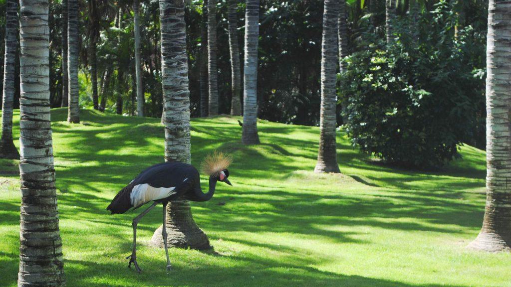 US Loro Parque Tenerife13