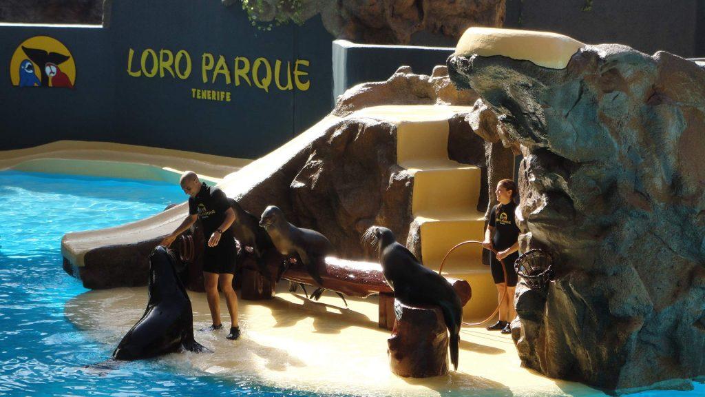US Loro Parque Tenerife18
