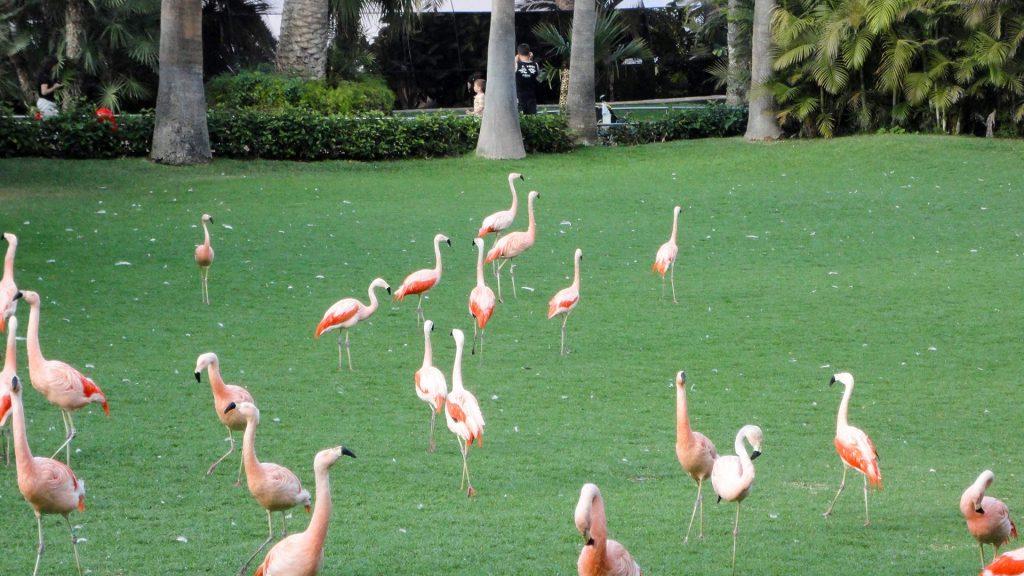 US Loro Parque Tenerife19