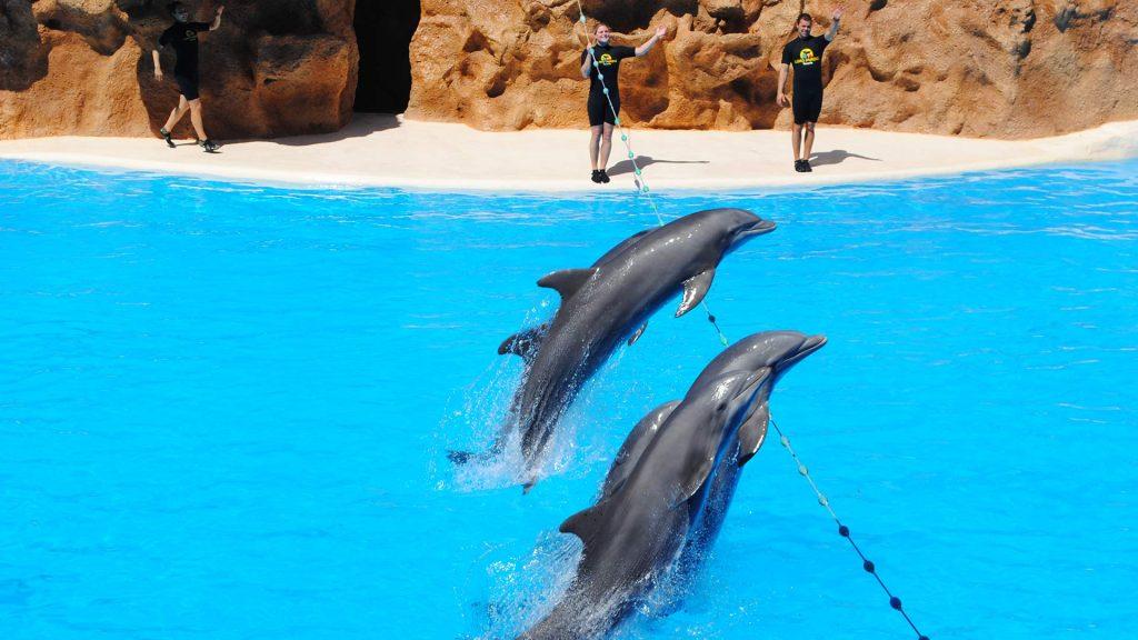 US Loro Parque Tenerife3