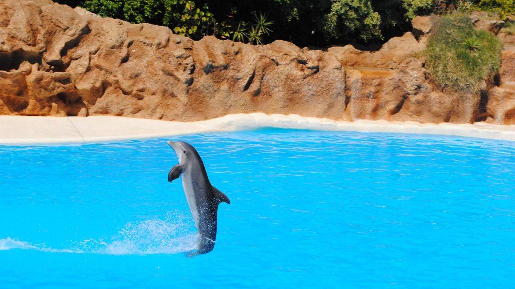US Loro Parque Tenerife4