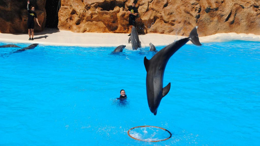 US Loro Parque Tenerife5