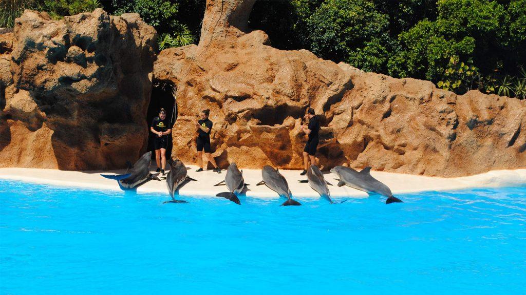 US Loro Parque Tenerife6