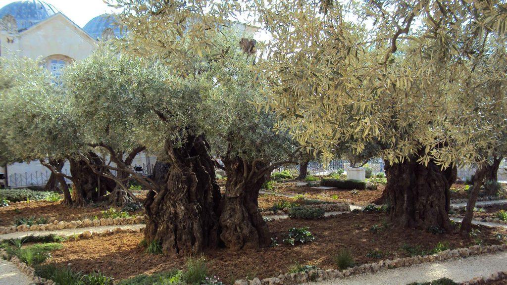 EN The Holy Earth–Israel Lucian Petrea 22