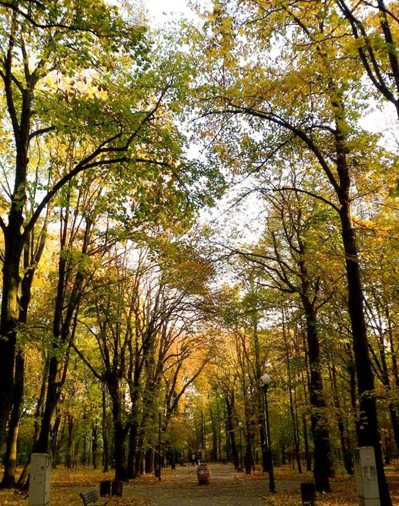 EN Autumn Landscape Otilia Andries 11