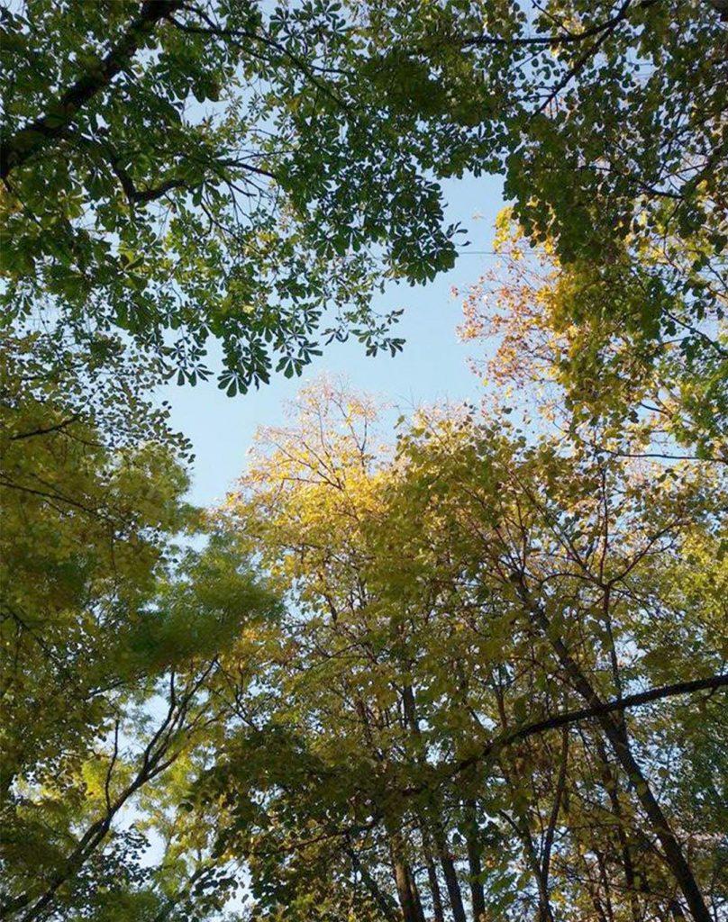 EN Autumn Landscape Otilia Andries 2