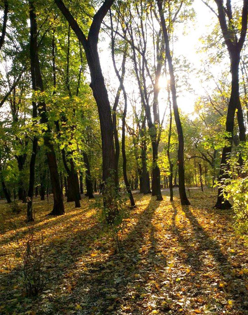 EN Autumn Landscape Otilia Andries 3