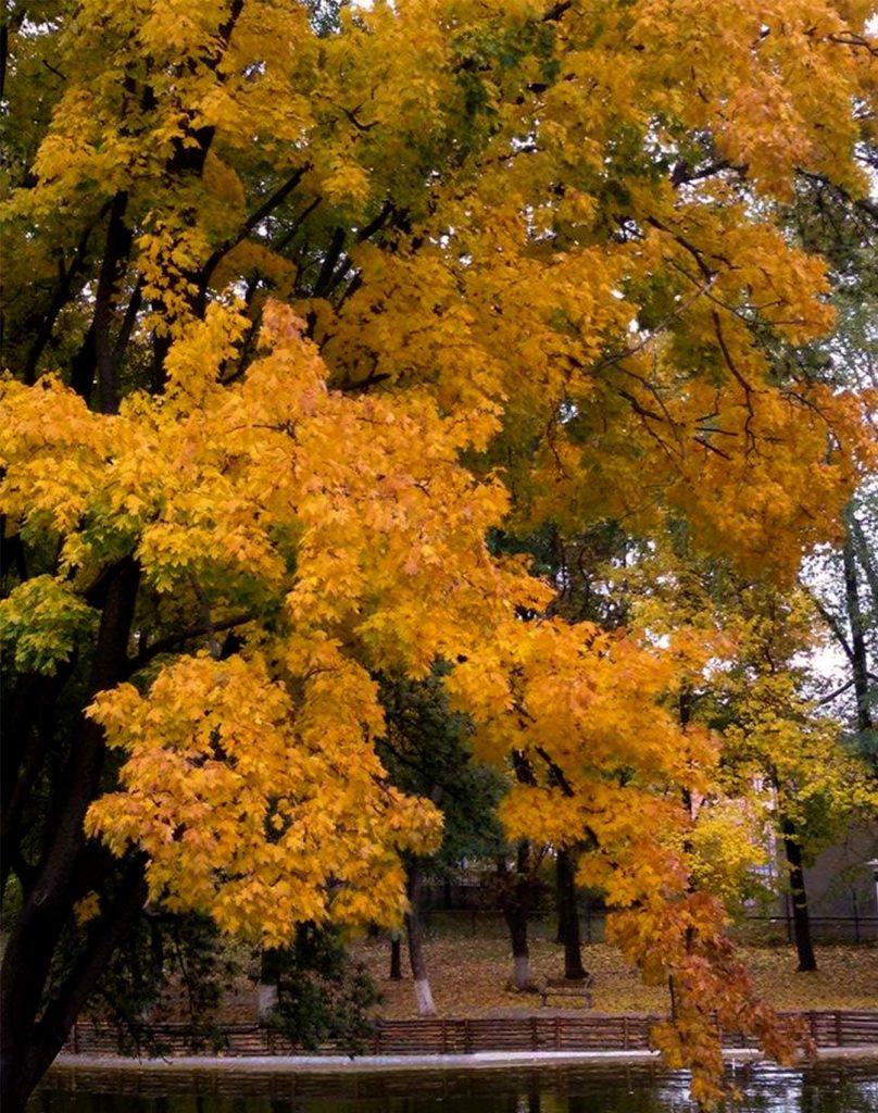 EN Autumn Landscape Otilia Andries 4