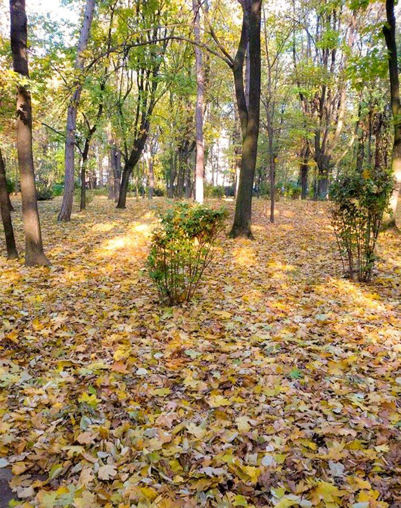 EN Autumn Landscape Otilia Andries 6