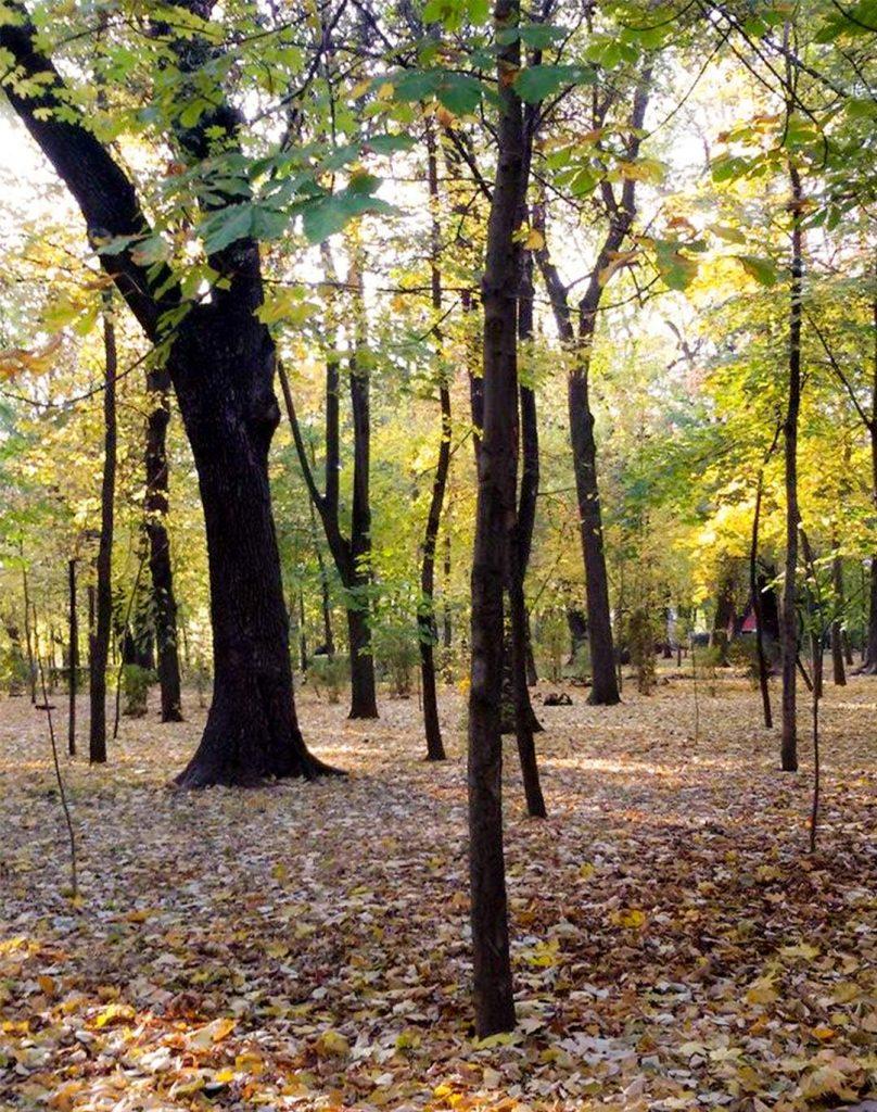 EN Autumn Landscape Otilia Andries 9