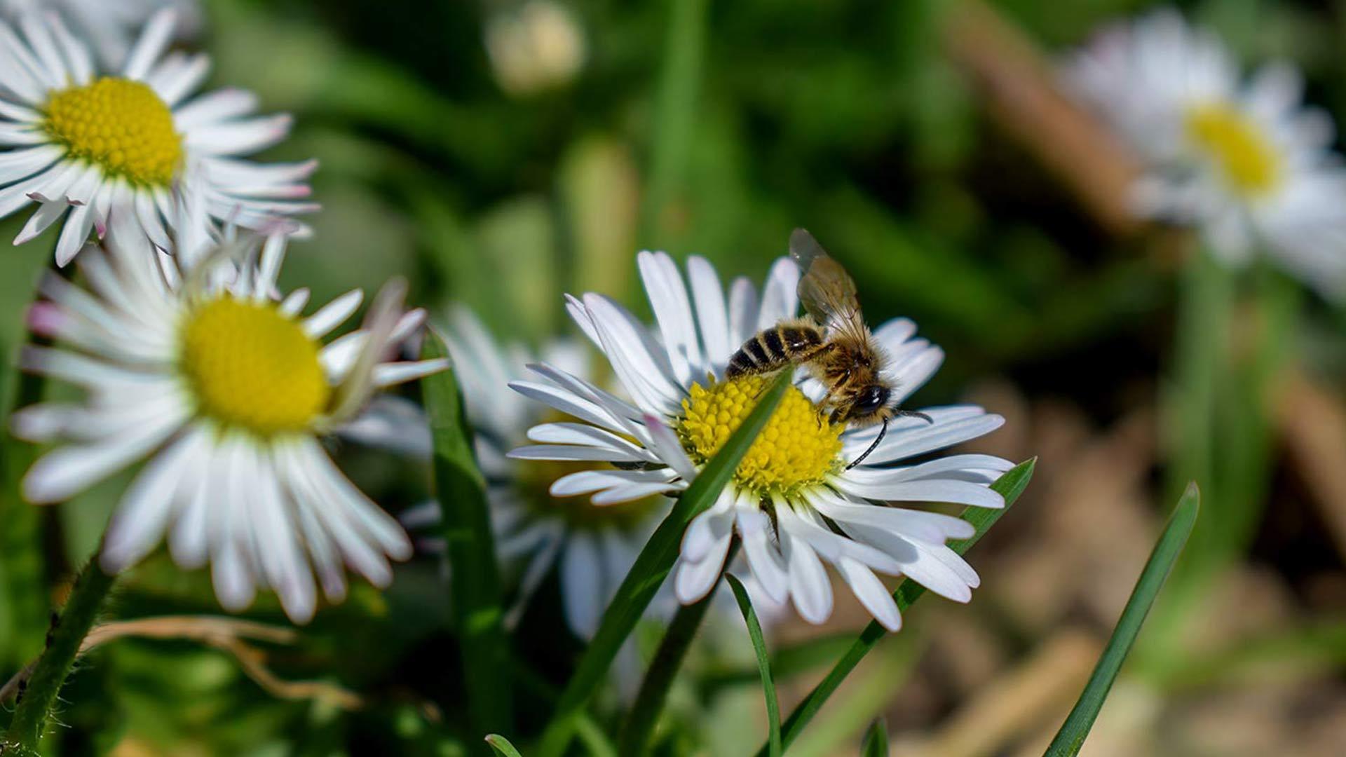 Spring-The-season of hope