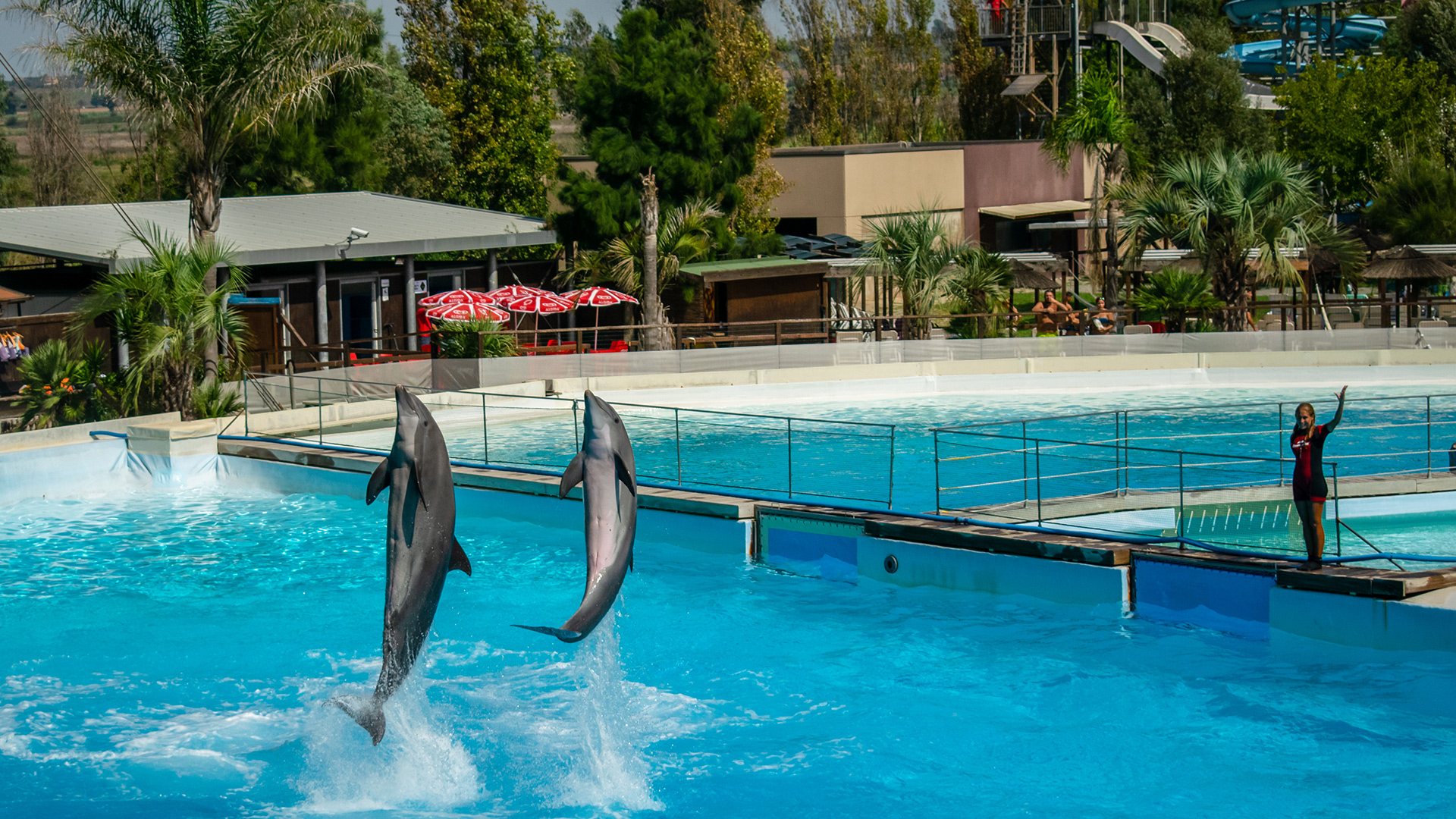 Zoomarine Dolphinarium