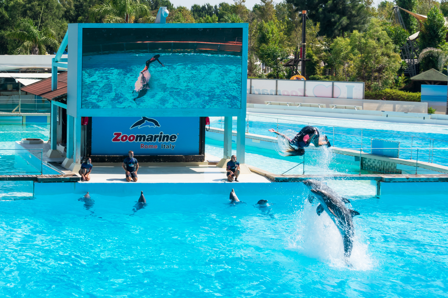 Dolphins in the middle of their show while helping their trainer to jump out of the water